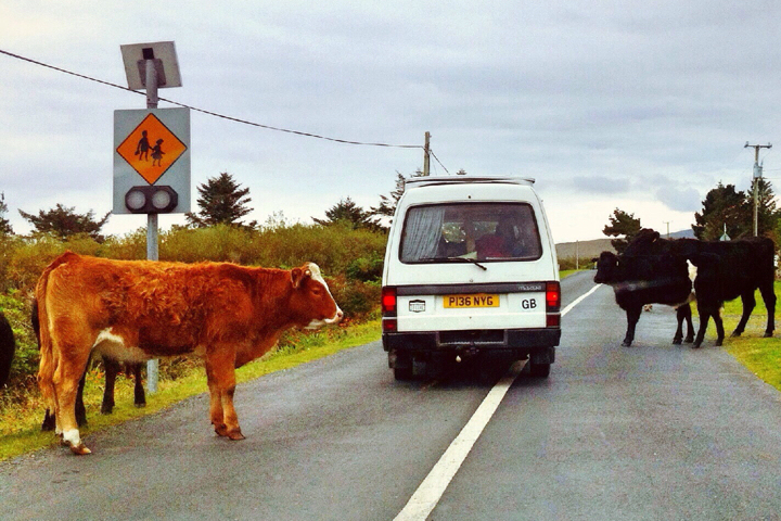blog-van-or-cow