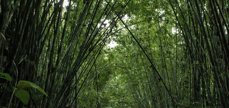 bambus merino tech pally 39 hi. Black Bedroom Furniture Sets. Home Design Ideas